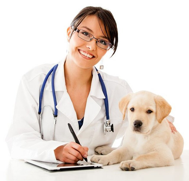 How Often Should You Take Your Dog to the Vet?