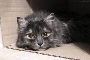 Why Do Cats Love Boxes - Theory #2: Conflict Resolution